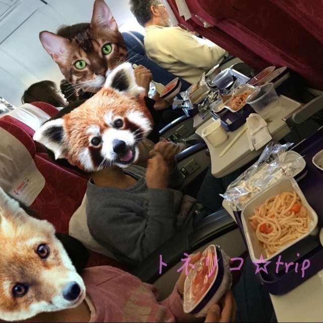 中国東方航空でシンガポールへ。機内食食べる。