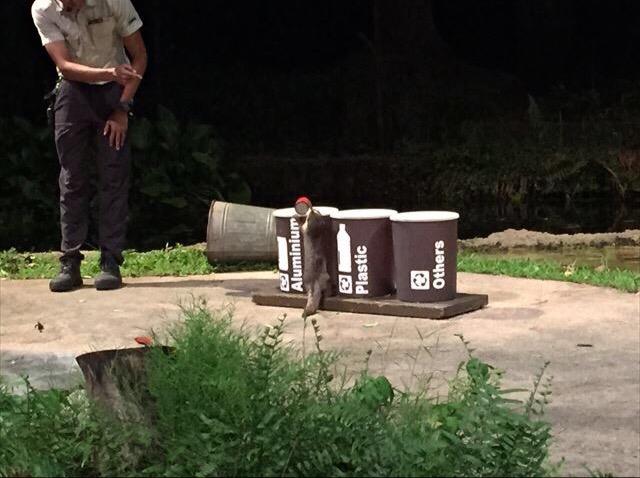 ナイトサファリの日本語トラムは現地予約がお得。秘密の入口で待ち時間なし。