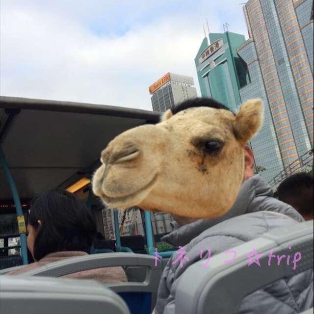 オープントップバスに乗ります