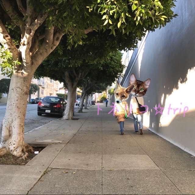 坂のサンフランシスコを歩く