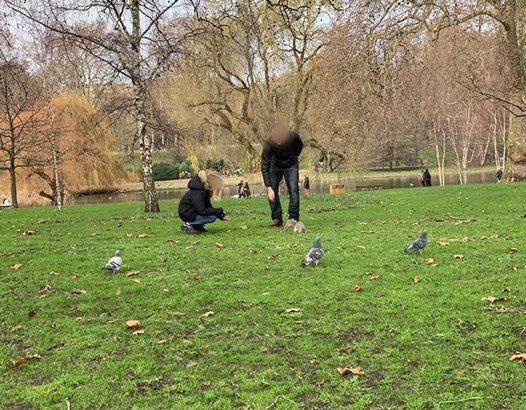 【ロンドン家族旅行術#08】セントジェームズパーク攻略